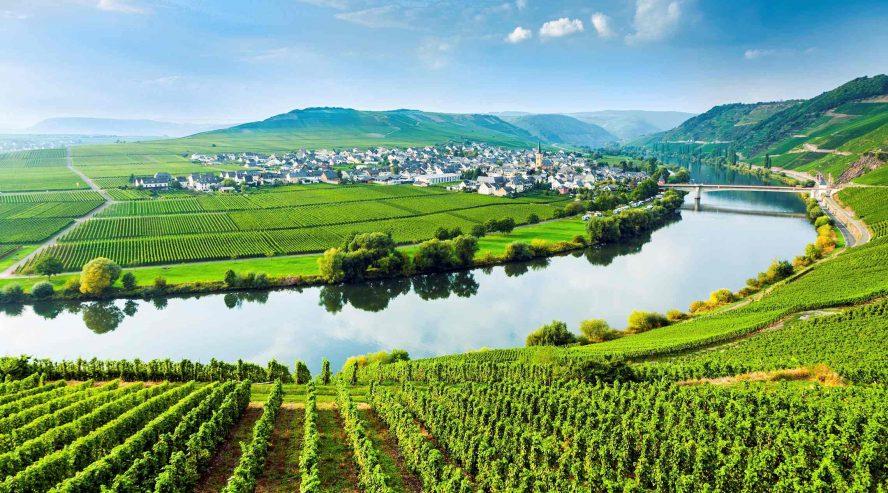 Moselle viiniviljelyksiä