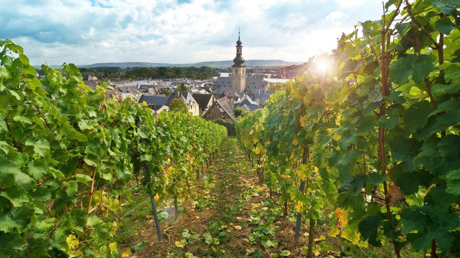Rüdesheim-viiniviljelys-Saksa-Reinjoki-1596x896.jpg