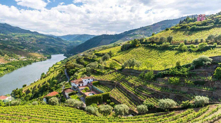 Viiniviljelyksiä Dourojoen laakso Portugali