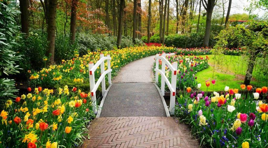 Keukenhofin-puutarha-Alankomaat-888x493.jpg